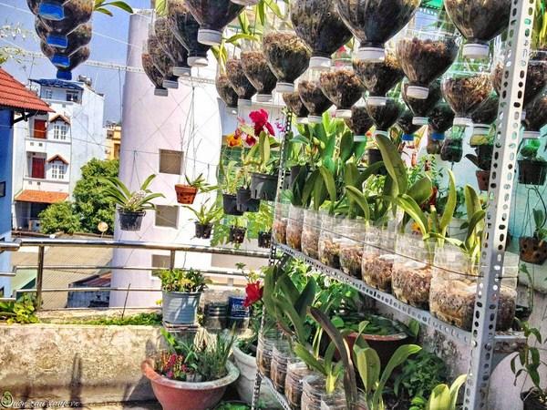 Kinh nghiệm trồng lan trên sân thượng