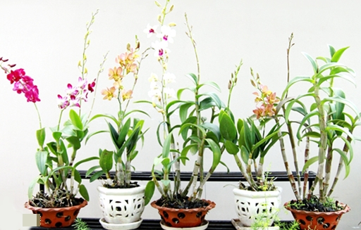 Hướng dẫn cách trồng lan tại nhà