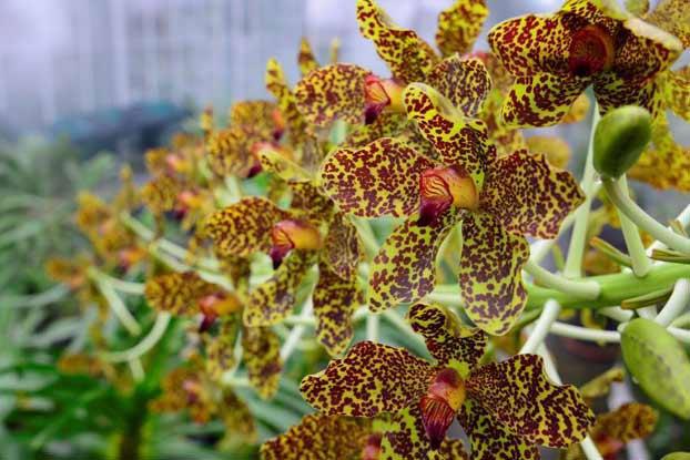 Cách trồng lan Thanh tuyền - 2